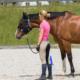 pferde-coaching