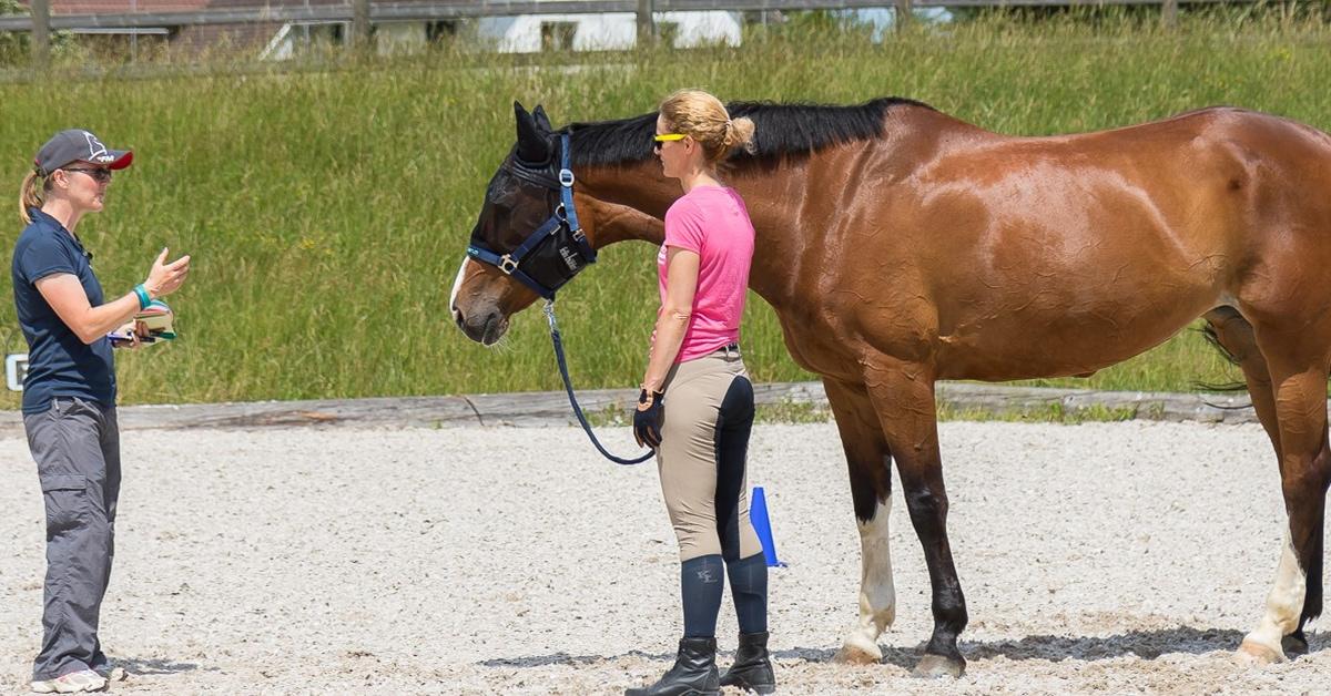 Pferde Coaching