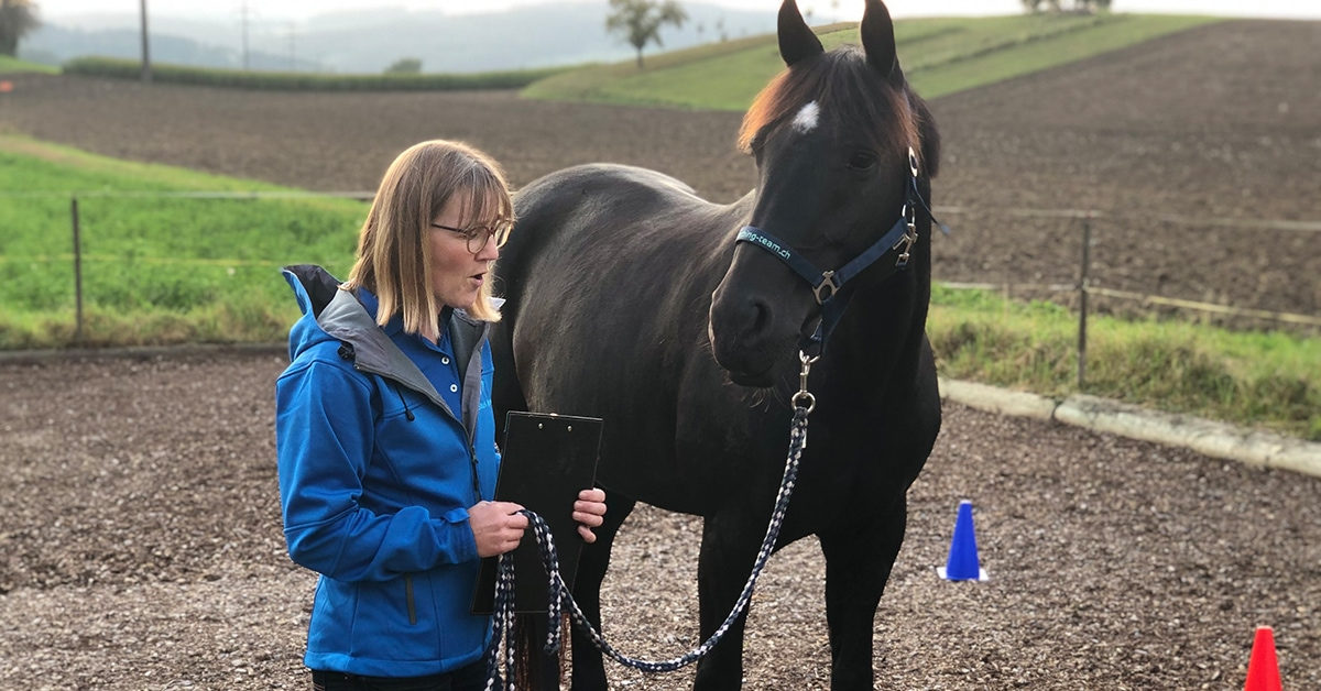 Fachimpuls Pferdeunterstützes Coaching